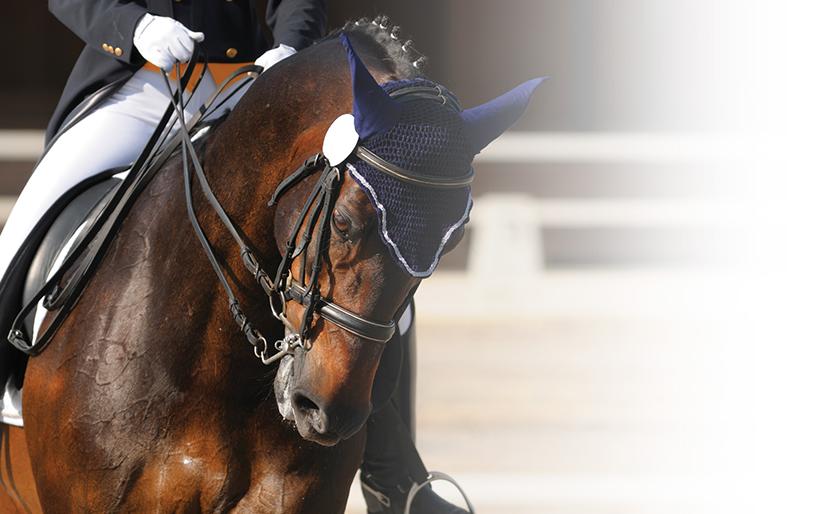 fincas los establos ciudad ecuestre cap cana fincas en venta caballos adiestramiento